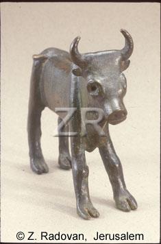 107-1 Calf Samaria
