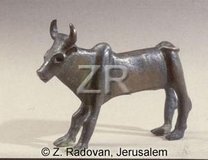 107-4 Calf Samaria