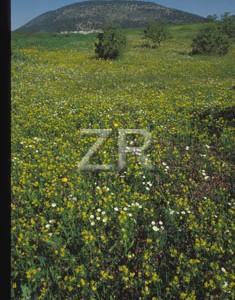 152-7 Mt Tabor