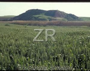 1579-8 Tel Eglon-(El Hesi)
