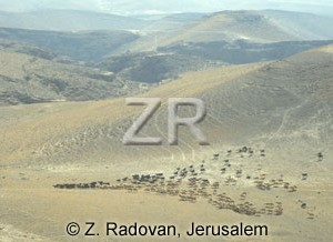 1651-4 Herds in the Negev