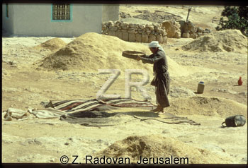 1878-2 Wheat sifting