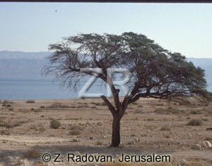 2092-1 Dead Sea and Moav