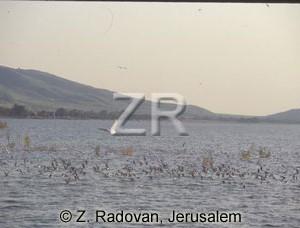2246-3 Sea of Galilee