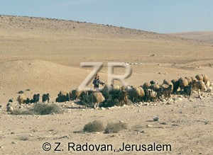 2276-3 Sheep in the Negev