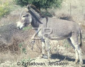 2533-1 Donkey