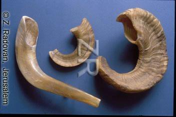 3039-1 Shofar