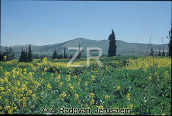 3076-3 Lower Galilee
