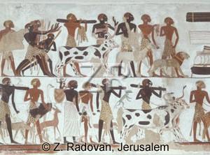 3116 Nubians