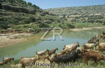 3141-3 Goats