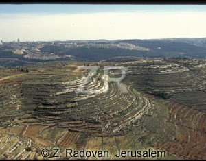 3336-8 Judean hills