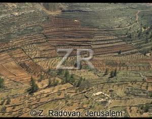 3338-4 Judean hills