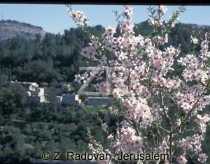 3480-7 Judean hills