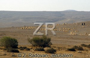 4419 Herds in the Negev