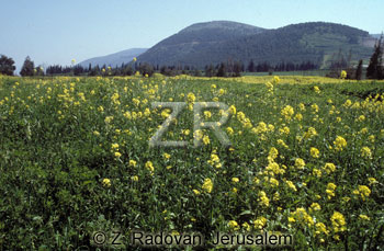 442-1 The Valley of Jezreel