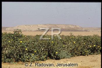 5065 Tel Ziklag-(Sharaa)