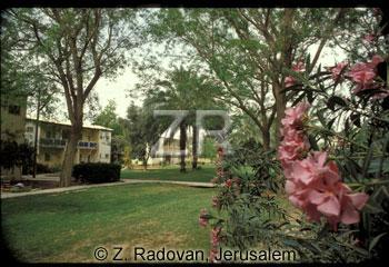 5121-2 Kibutz Revivim