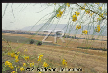 582-1 Shunem
