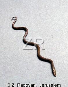868 serpent