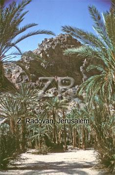 1798-2 The Paran oasis