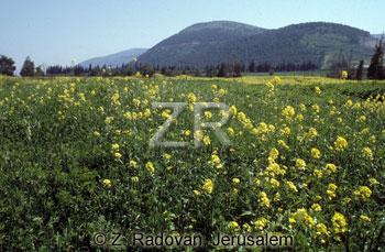 442-1 The Valley of Jezreel