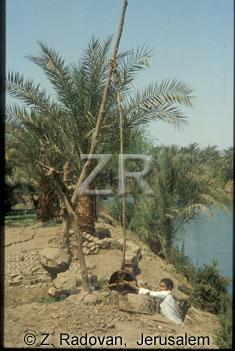 4564-2 Nile