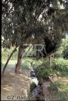 462-2 Elisha's spring