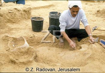 4738-6 Anthropoid excavatio