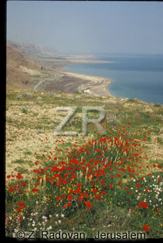 4906-4 Dead Sea shores