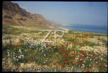 4906-6 Dead Sea shores