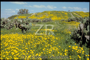 5056-1 Tel Erani