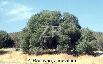 5172 Elah